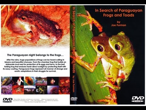 In Search of the Frogs and Toads of Paraguay!
