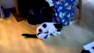У Леона глисты, у кота глисты, у всех глисты
