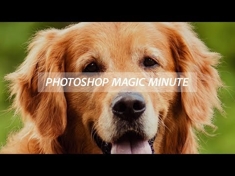 Photoshop Magic Minute: Using the Refine Edge Brush in Photoshop thumbnail