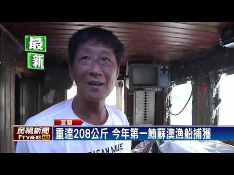 今年全台第一鮪出現 蘇澳籍漁船捕獲重208公斤-民視新聞