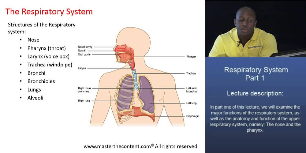 MCAT®: The Respiratory System - Part 1 - Major Structures of the ...
