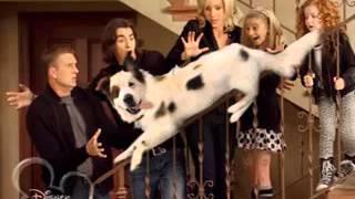 Собака точка ком   1 сезон, 3 серия