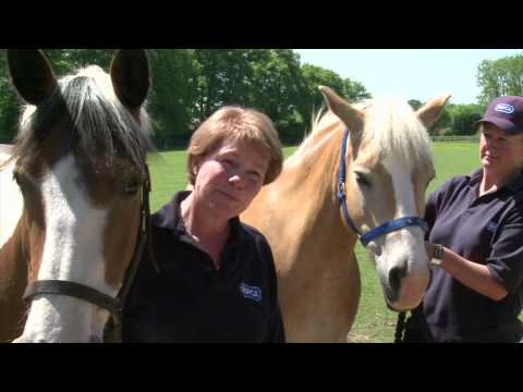 RSPCA Video - Amersham Horses Rescue