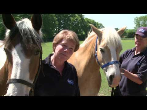 RSPCA Video - Amersham Horses Rescue