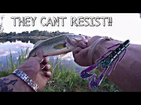 Bank Fishing The Texas Rigged Ultra Vibe Speed Craw!