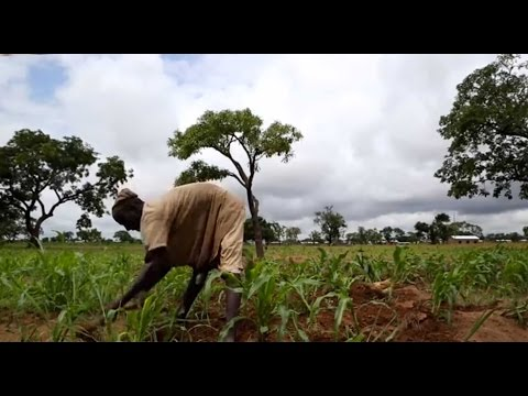 Digging For Answers: Examining the Effects of Rainfall Index Insurance for Farmers in Ghana