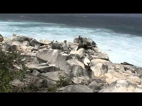Viaje a las Islas Galápagos (1ª Parte)