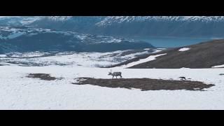 Ailo's Journey / Aïlo : Une odyssée en Laponie (2019) - Trailer (French)