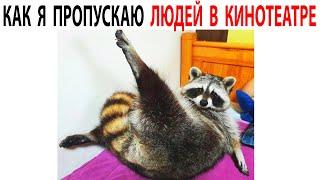Приколы с Енотами  Подборка мемов с Животными как  @Max Maximov #shorts