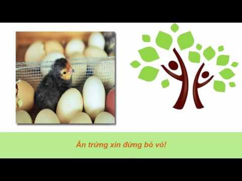 Sức Khỏe và cuộc Sống - Ăn trứng xin đừng bỏ vỏ !