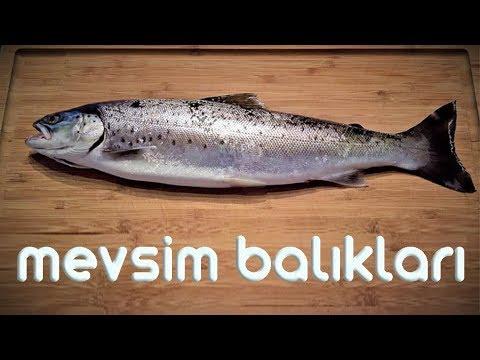 Mevsim Balıkları | Hangi Ayda Hangi Balık Yenir | Laforizma