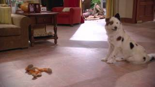 Собака точка ком  19 серия   Стэн говорит с бабушкой  Sneak Peek