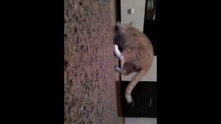 Мой котик ловит мышей