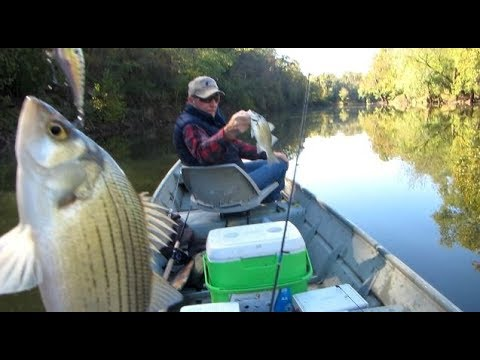 FISH4FUN: CHASING WHITE BASS ON POMME DE TERRE LAKE