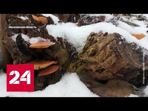 Жаркая зима: куда делись крещенские морозы - Россия 24