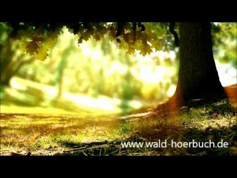 Wenn der Wald spricht 2 - Kapitel 14 - Arm & Reich