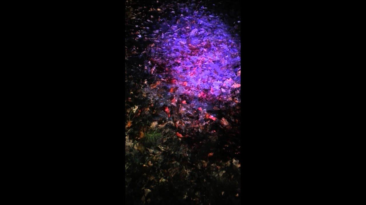 Blood Tracking Light