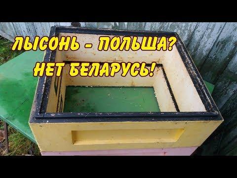 пчеловодство. Лысонь - это Польша?  нет -  Беларусь!