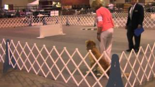 Sting Obedience Wild Card Open