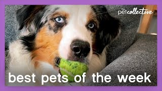 Ball Is Life | Best Pets of the Week