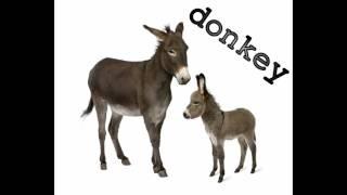 Видео урок для детей про звуки животных на английском