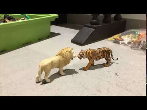 Lion and Tiger Ultimate Slap Part 1 thumbnail