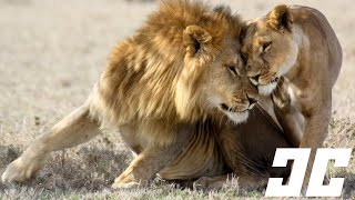 Repeat youtube video 10 Bizarre Animal Mating Rituals