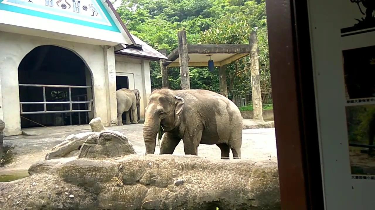 動物園-大象篇(臺北) - YouTube