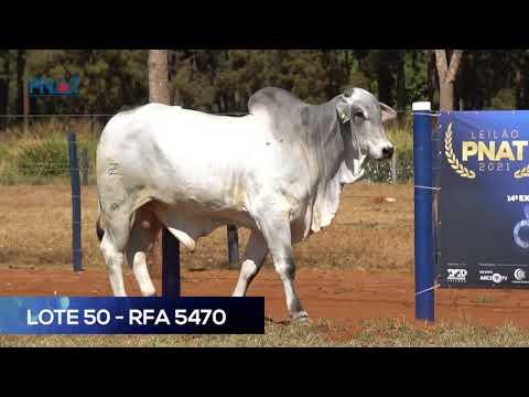 LOTE 50 - RFA5470 - NELORE