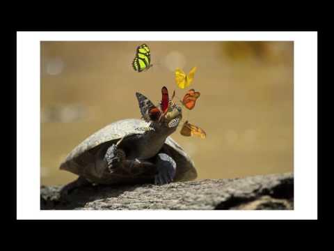 Pete Oxford - Yasuni National Park