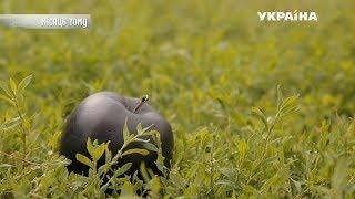 Яблоко раздора | Реальная мистика