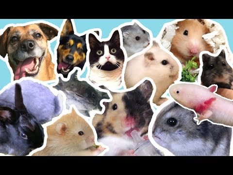 Meine Haustiere 💖 ALLE 24 💖🐹🐰🐱🐶🐟🐾 50.000 Abo-Special