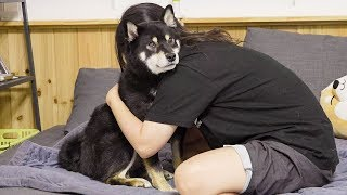 hugging my shiba dog a little too long