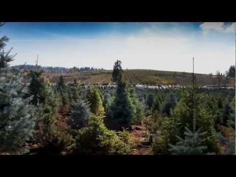 Hillside Tree Farm - Apple Hill, CA.