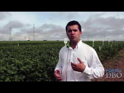 O impacto dos mecanismos de plantio no desenvolvimento da soja