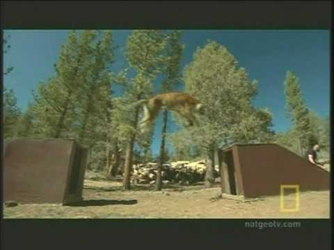 Deadly San Francisco Zoo Tiger Attack - YouTube
