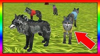 СИМУЛЯТОР ВОЛКА #18 РОДИЛСЯ ВОЛЧОНОК Жизни Зверей WildCraft про котят лис собак ДЕТСКИЕ ИГРЫ