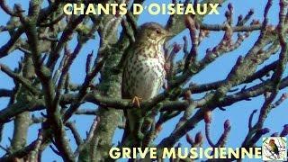 Chants d