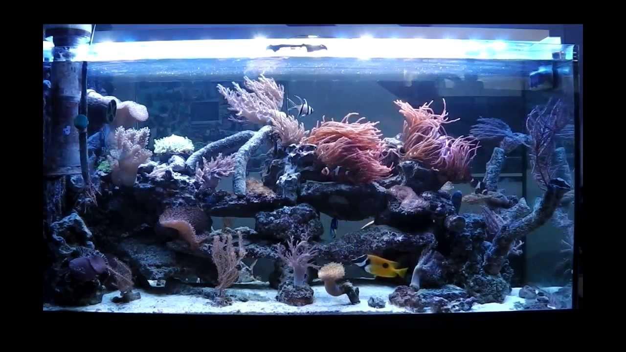 Salzwasser meerwasser aquarium 48x3w led hd youtube for Salzwasser aquarium