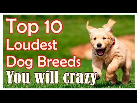 10 Loudest Dog Breeds, you will crazy !! 10 Dog Breeds Barking HD Sound Effect