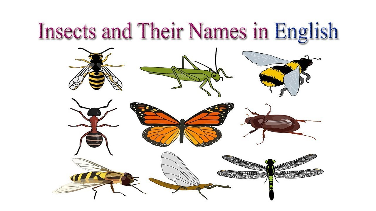 insects and their names in english insects names in english youtube