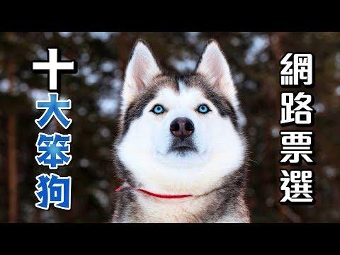 【狗狗排行榜】網路票選十大笨狗,你的毛孩第幾名?呵~😏