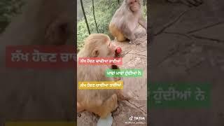 Lakh hovan chachiya taiiya mawa mawa