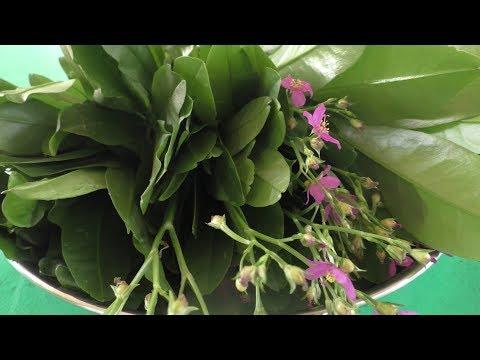 village style sambar keerai sambar – Cooking vlog / Cooking By Village food Recipes