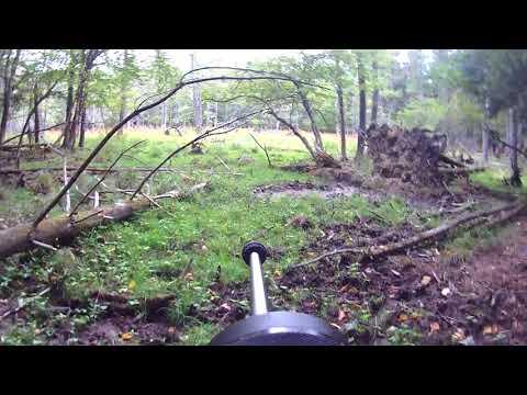 Hog Hunting N.C