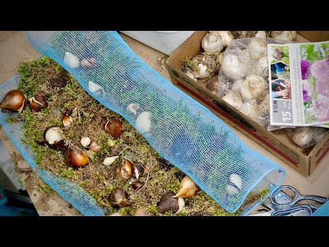 planting-1000-spring-flowering-bulbs-in-an-hour