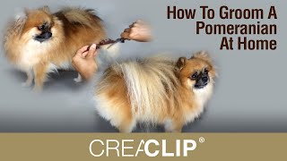 How To Groom A Pomeranian At Home - Makes Grooming Your Dog Easy!