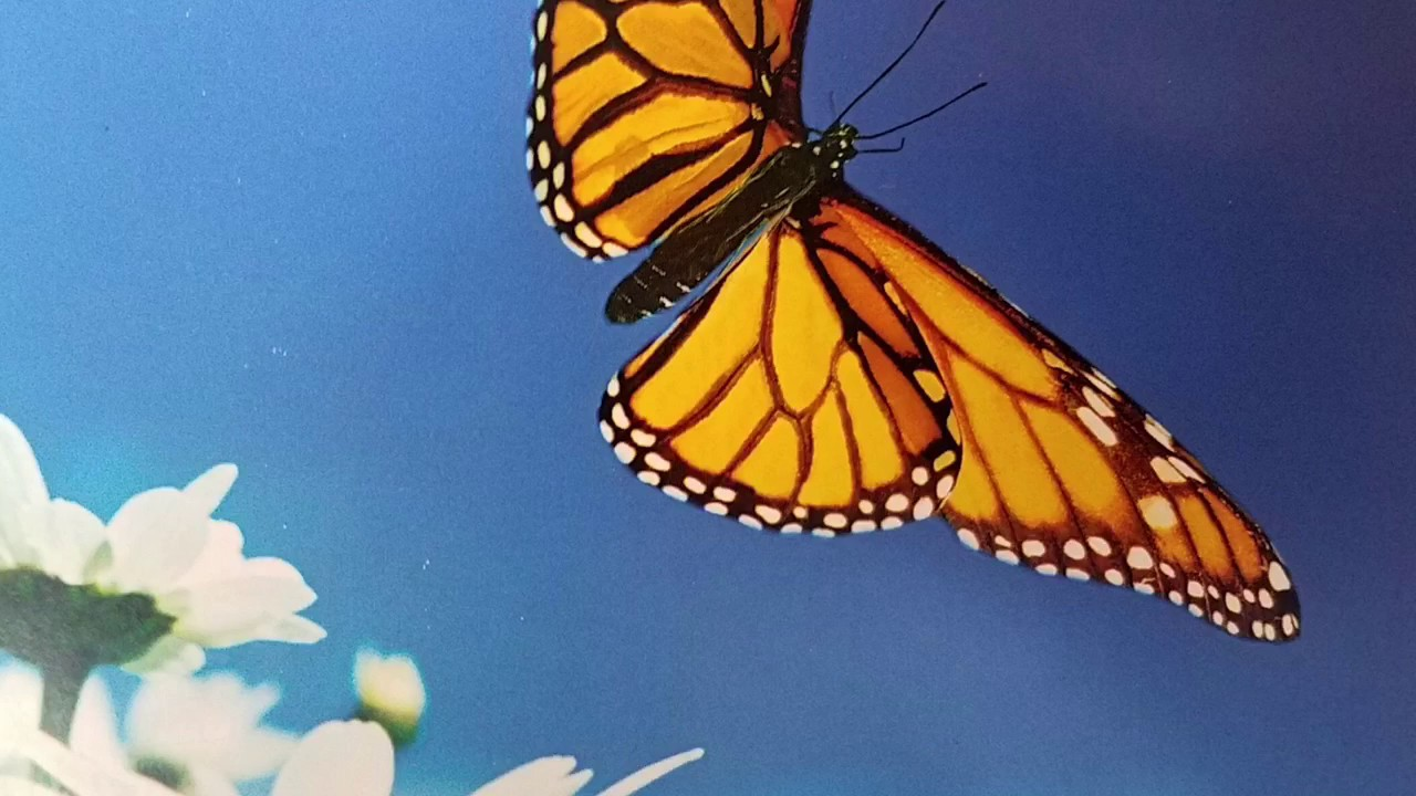 what happens next caterpillar to butterfly read aloud for toddlers