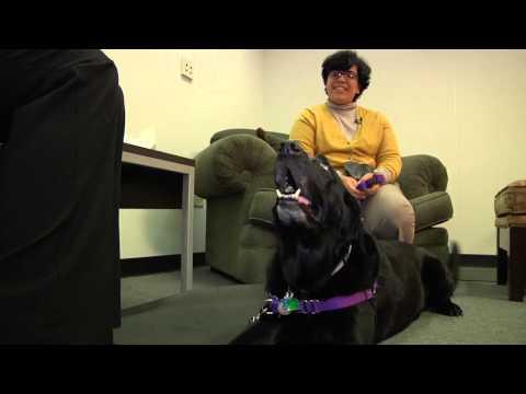 Behavioral Medicine Service at NC State University's College of Veterinary Medicine