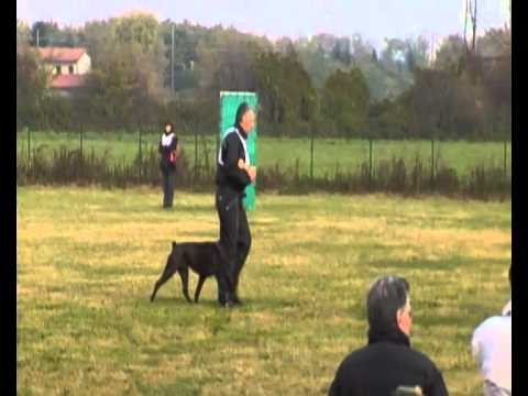 Pablo del Quinto Canto campionato BCI 2010